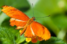 Free Beautiful Bright Orange Butterfly Stock Image - 15134221