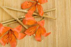Free Orange Tiger Lily Stock Images - 15134984