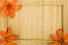 Free Orange Tiger Lily Stock Photo - 15135050