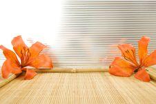 Free Orange Tiger Lily Stock Image - 15135081