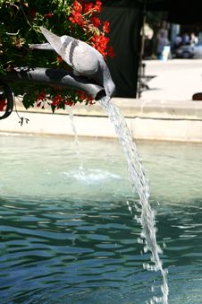 Free Pigeon Drinking Water Stock Photography - 15135142