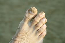 Free Feet On The Beach Stock Photography - 15135292