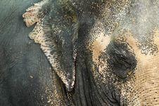 Thai Elephant. Stock Photos
