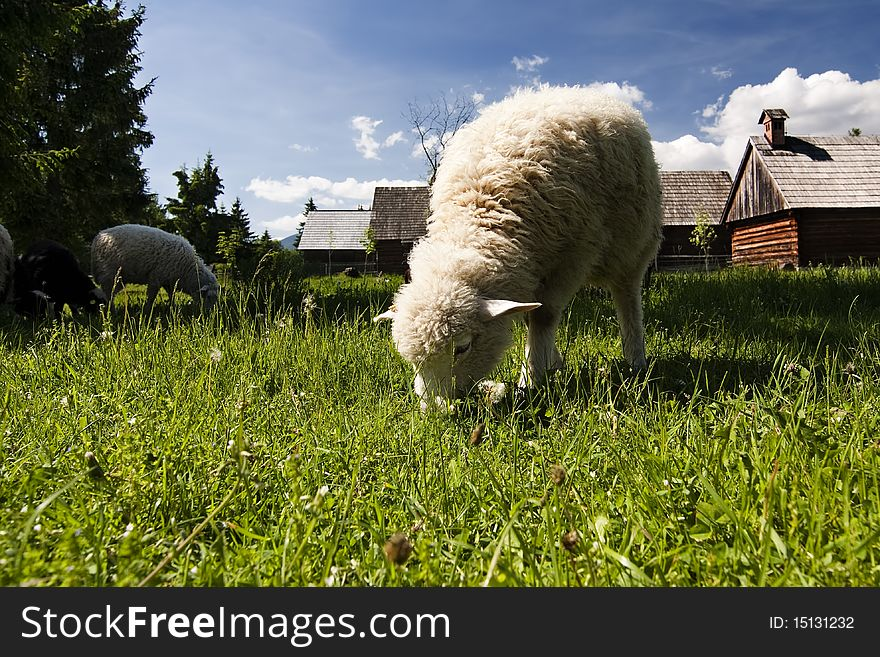 Old village with sheeps