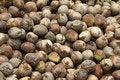 Free Coconut Stock Photo - 15141620