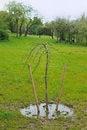 Free Tiny Tree Stock Photo - 15143840