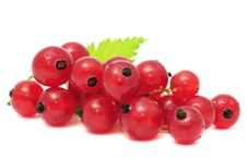 Free Red Currants Royalty Free Stock Photos - 15140148