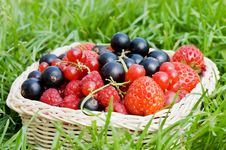 Free Ripe Berries In A Basket Stock Photography - 15140672