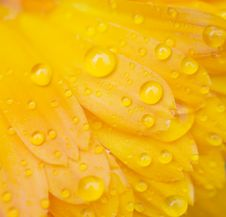 Free Dew Drops On A Flower Royalty Free Stock Image - 15140766