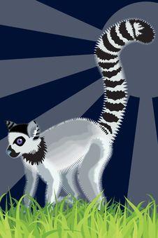 Free Lemur Royalty Free Stock Photos - 15141188