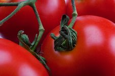 Free Tomatoes Close-up Royalty Free Stock Photo - 15142175