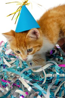 Free Cat Kitten With Hat Stock Photo - 15143810