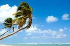 Free Tropical Beach Stock Photo - 15143900