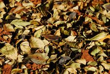 Free A Bed Of Dead Leaves Royalty Free Stock Photos - 15143928