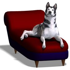 Free Alaskan Malamute Dog Royalty Free Stock Images - 15143939