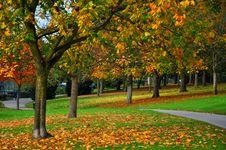 Free Autumn In Rafael Park. Stock Photography - 15146102