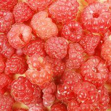Free Raspberries Royalty Free Stock Photo - 15147045