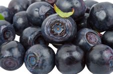 Free Ripe Bilberries Royalty Free Stock Photos - 15149138