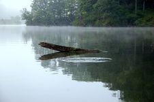Free Log In The Lake Royalty Free Stock Photos - 15149508