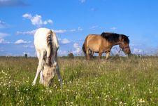 Free Horses Stock Photo - 15149730