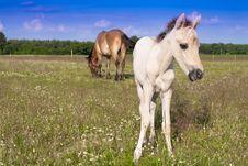Free Horses Royalty Free Stock Image - 15149736