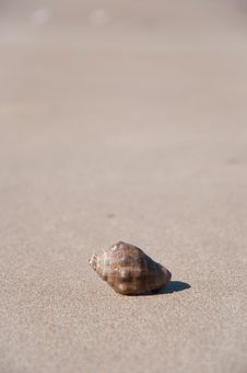 Free Shell In The Sand Of The Beach Stock Photos - 15149843