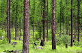 Free Lush Green Forest Royalty Free Stock Photos - 15150188