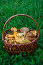 Free Basket Full Of Mushrooms Stock Image - 15150371