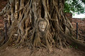 Free Head Of Buddha Statue In Tree Stock Photos - 15152133
