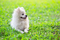 Free White Dog On Green Grass Stock Image - 15156961