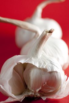 Garlic On Red Background, Portrait Stock Photography