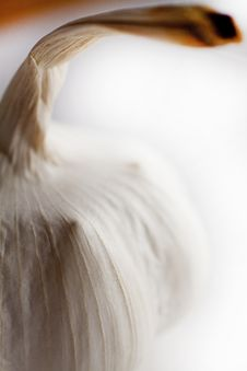 Whole Garlic On White Shallow Focus Royalty Free Stock Photos
