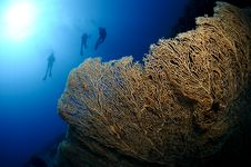 Free Seascape With Scuba Divers Royalty Free Stock Photos - 15154348