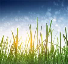 Free Grass Stock Image - 15155161