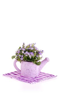 Free Purple Flowers In Watering Can. Stock Photography - 15155842