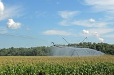 Free Irrigating A Corn Field Royalty Free Stock Images - 15157289