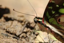 Free Butterfly Stock Image - 15157921