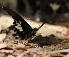 Free Butterfly Stock Image - 15158141