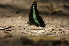 Free Butterfly Stock Images - 15158204