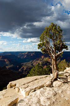 Free Grand Canyon Tree Stock Photos - 15159683