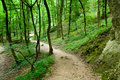 Free Path In A Forest Royalty Free Stock Photos - 15162578