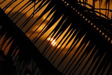 Free Palm / Sunset Background Royalty Free Stock Photo - 15161735