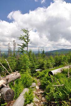 Free Mountain Forest Stock Photos - 15162093