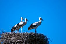 Free Three Storks Stock Images - 15162174