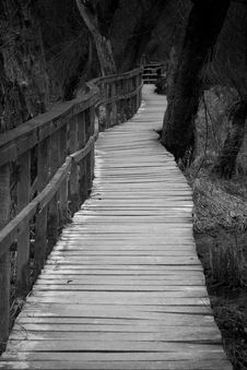 Free Boardwalk In Forest Royalty Free Stock Photos - 15163038