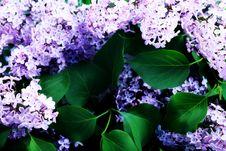 Twig Royalty Free Stock Image