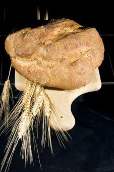 Free Bread Stock Photos - 15163523