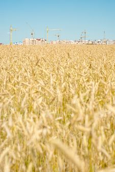Free Construction In The Wheat Field. Royalty Free Stock Photography - 15163857