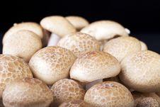 Free Brown Beech Mushrooms Royalty Free Stock Photo - 15163945