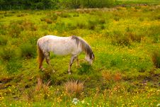 Free A Horse In The Meadow Stock Images - 15163954
